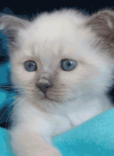un mimi chat