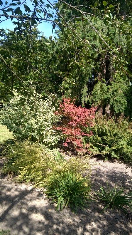 Il faisait beau hier, alors... envie de prendre une photo... Je vous emmène dans ce coin de jardin...