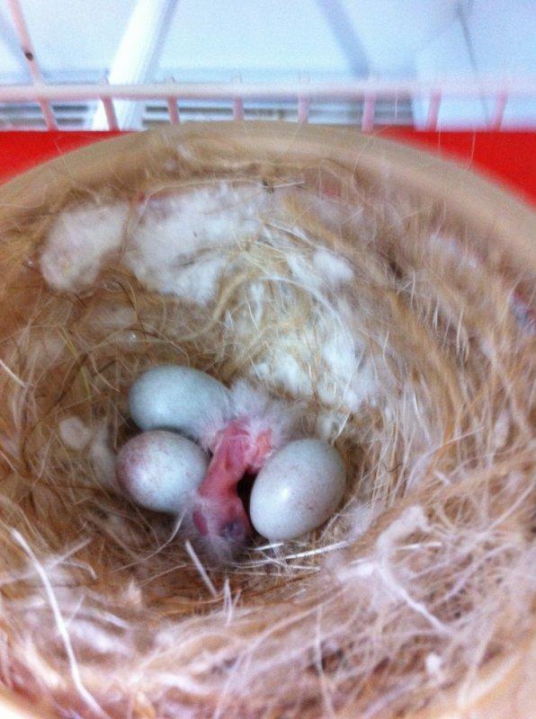 Première naissance