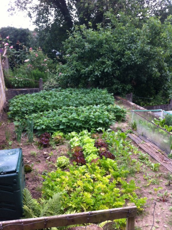 Tout pousse bien au jardin