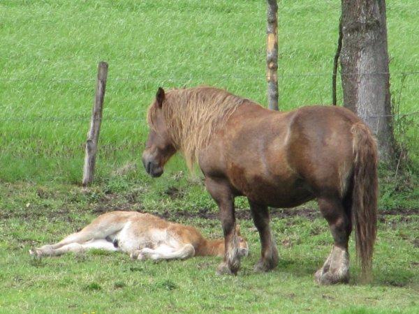 une maman et son poulain
