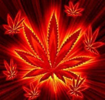 Weed Weed Weed !!