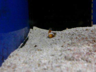 Repose en Paix ; Nemo ♥