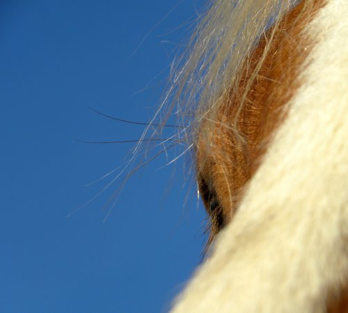 Le soleil repointe le bou de son nez...  L'heure de la sieste pour certains, groming pour d'autres ... Et puis moi .. ben photos quoi :)