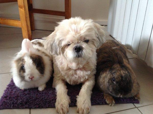 Ma petite Tina et Arya et Pupuce
