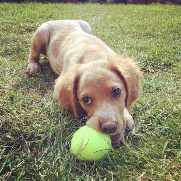 Lola 3 mois et demi