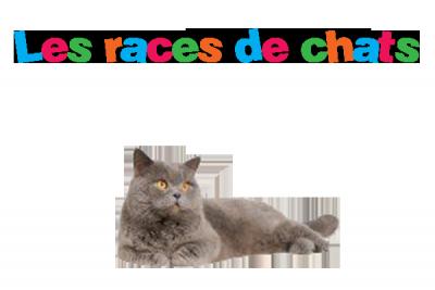 Les races de chats .