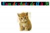 Nom de chats de A à H .