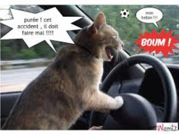 le chat qui conduit