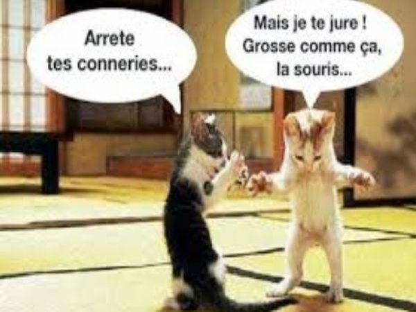 les chats muschataires