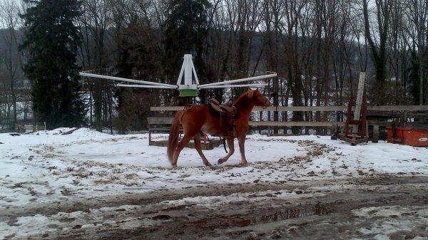chez barns  équitation western