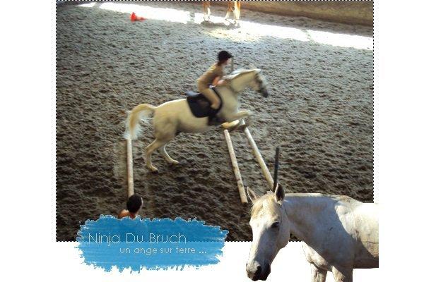 Présentation du cheval