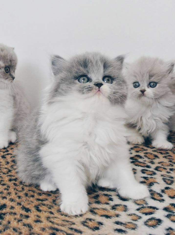 chat ou chaton