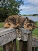 chat ou chanton
