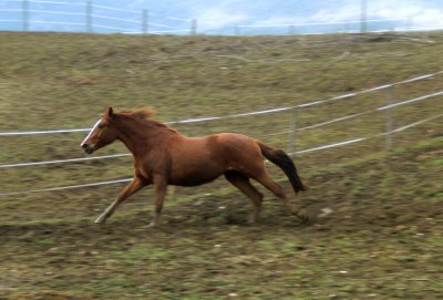 Mars 2011 Mon poney en furie!
