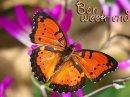 Photo de papillon21230