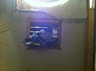 013 224/2011 vanhoutte/koopman
