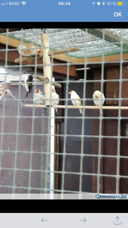 Voici l'élevage avec les photOs de chardonneret agate tête blanche pense prendre un couple mais dur pour la repro c vrai ? Merci de me conseiller svp