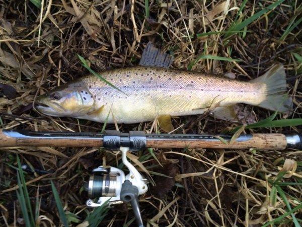 Ouverture salmonidés 2015