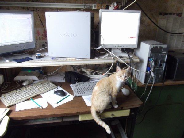 MI-nè-NETTE  laisses donc mes souris ...