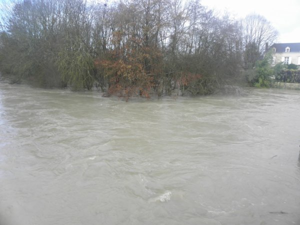 13 Fev crue du Loir à Lavardin