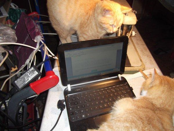 mes deux assistants devant un imprévu ordi