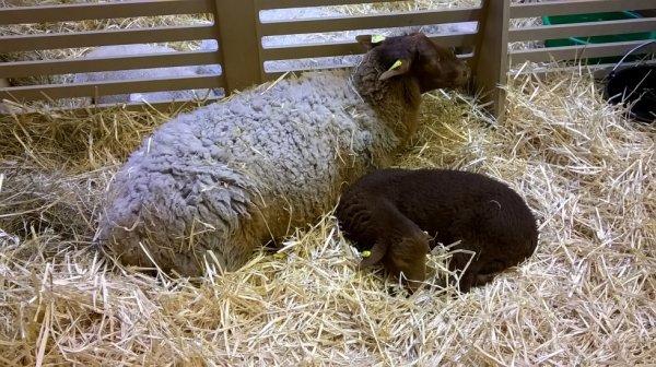 pour amis des animaux et monde agricole : images du Salon