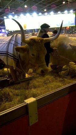 salon de l'agriculture belles cornes de vache