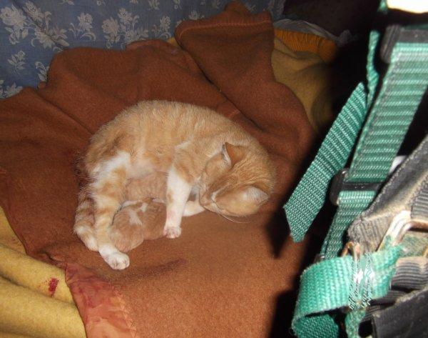 heureux événement ce matin 3 chatons