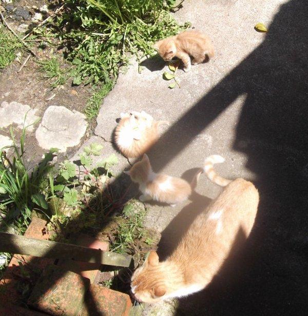 27 AVR la première sortie des chatons