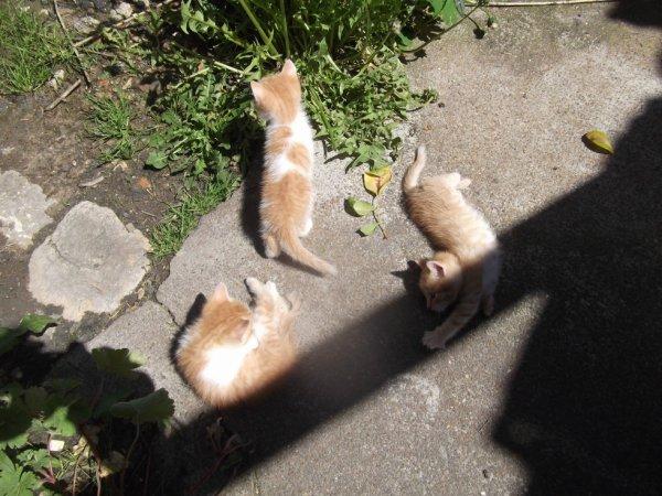 les chatons sous le soleil furtif