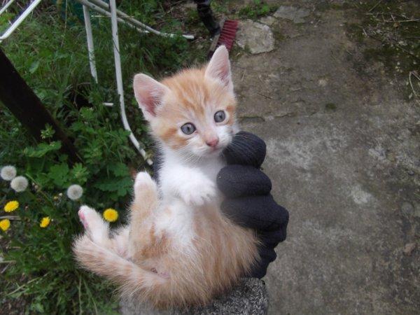 le chaton numéro 2