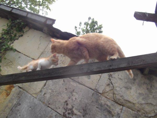"""chassé croisé ou """"chat s'est croisé"""""""