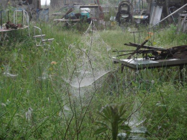 quelle humidité ...les toiles d'araignée sont dévoilées