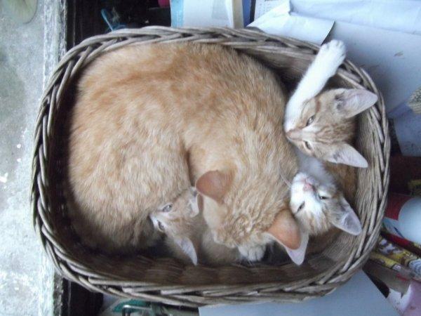 """les chatons skwattent la corbeille du """"tonton Rouch-katz"""""""