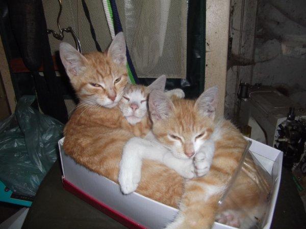 demain 6 mois les demoiselles chats