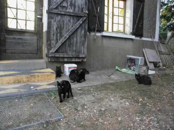 des nouveaux chats noirs chez mon ami du voisinnage JP