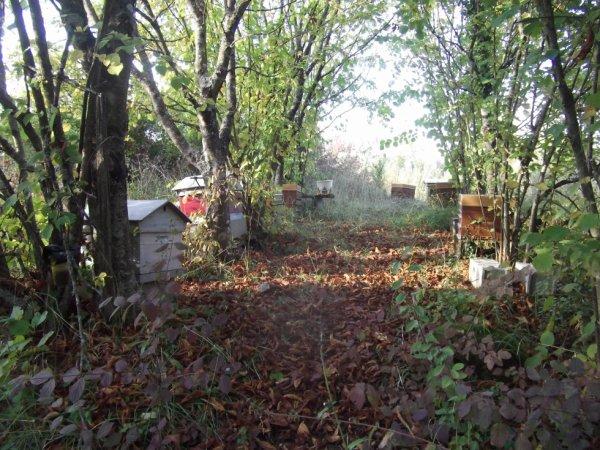 promenade du dimanche 16-10 : des ruches en forêt