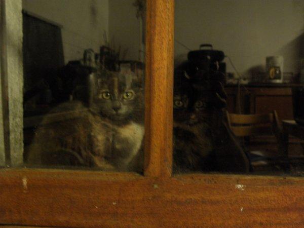 chats qui regardent de l'extérieur
