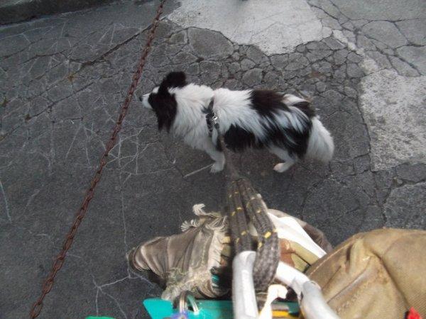 kit main libre pour chien