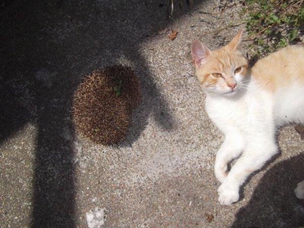 un de mes petits chats est étonné