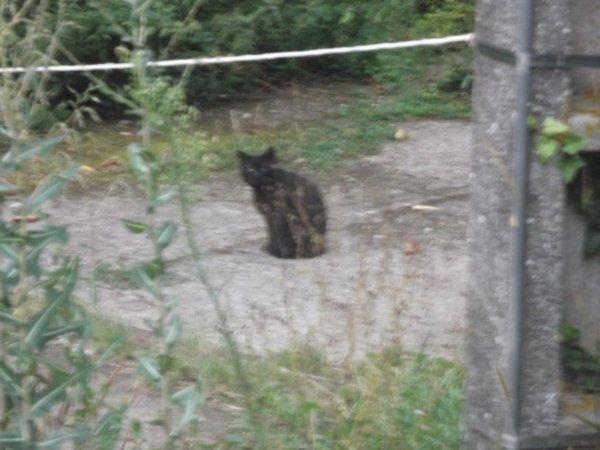 un chat vient observer mon dépannage véhicule