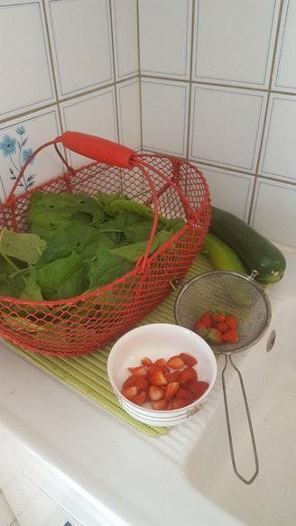 Premiers epinards, avants dernieres courgettes et dernieres fraises !