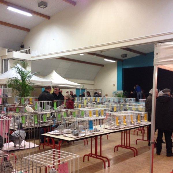 Expo Saint Étienne du Rouvray 489 pigeon