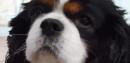 Photo de apache-mon-chien
