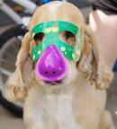 Photo de Dogs-Fashion