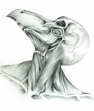 Homme-oiseau