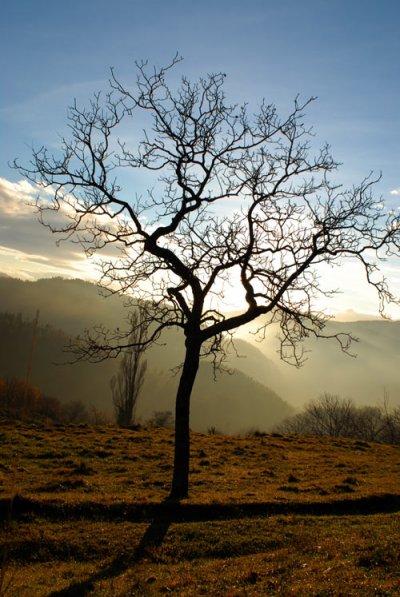 vie sans amour arbre sans feuilles - Arbre Sans Feuille