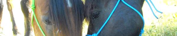 Deux poneys, une cavalière, trois vies liées à jamais.