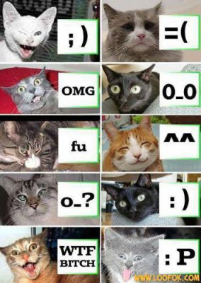 Les Chats Smilley  :D